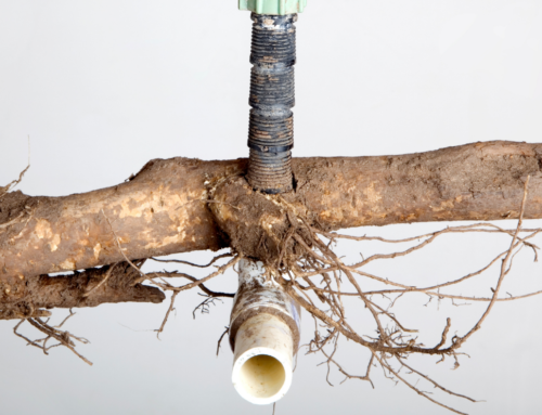 Preventing Tree Root Damage: Advice from the Best Sewer Repair Company in Kansas City